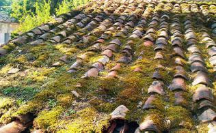 Démoussage toiture poitou charentes